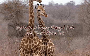 Kruger new 343x215 - Highlights of Kruger National Park and South Africa - 9 days from $3,660 per person twin share
