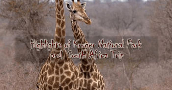 Kruger new 351x185 - Highlights of Kruger National Park and South Africa - 9 days from $3,660 per person twin share