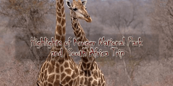 Kruger new 670x336 - Highlights of Kruger National Park and South Africa - 9 days from $3,660 per person twin share