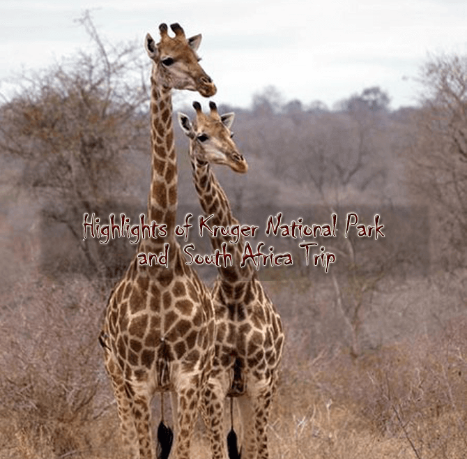 Kruger new - Highlights of Kruger National Park and South Africa - 9 days from $3,660 per person twin share