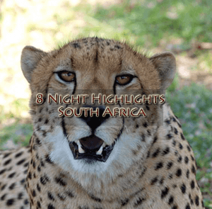 Cheetah new 300x295 - Cheetah-new