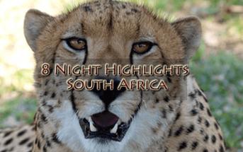 Cheetah new 343x215 - Travel News