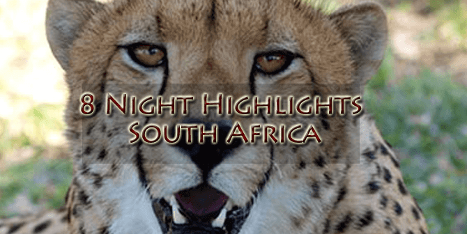 Cheetah new 670x336 - 8 Night Highlights South Africa, Kwazulu Natal, Safari and World Heritage Site