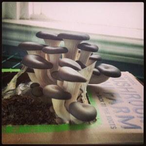 phoca thumb l mushroomforarticle 300x300 - phoca_thumb_l_mushroomforarticle