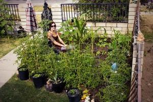 phoca thumb l s 2 garden donnella4 300x200 - phoca_thumb_l_s-2 garden donnella4