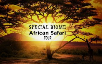 travel deals special biome banner 343x215 - Travel News
