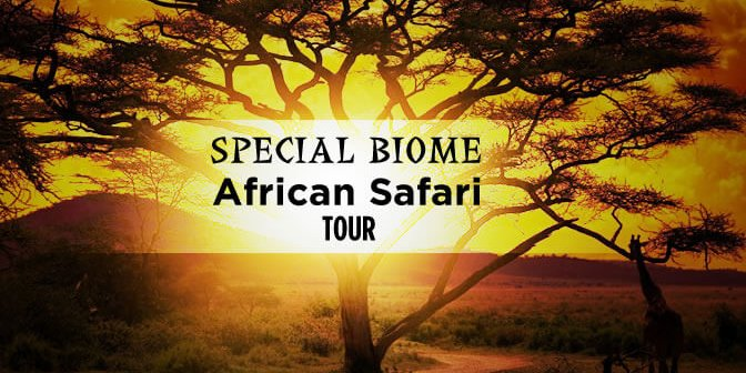 travel deals special biome banner 672x336 - Special Biome of Namibia & Botswana –14 Days From $5120 per person twin share* land only.