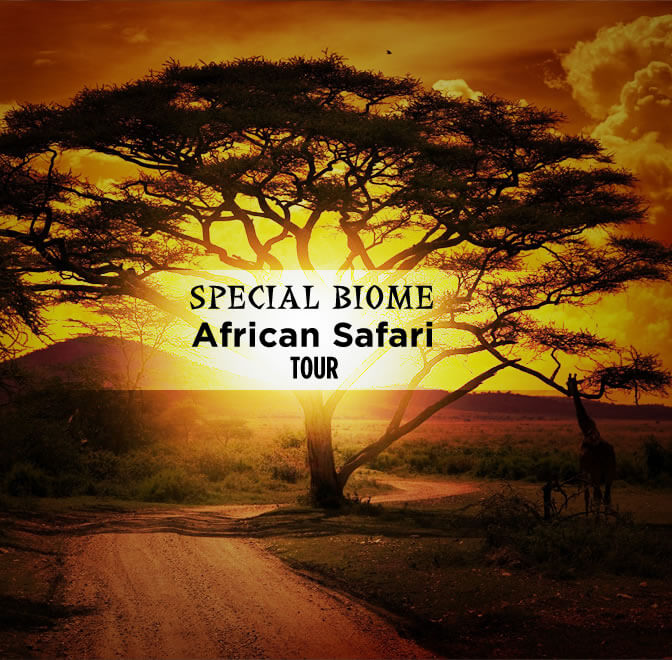 travel deals special biome banner - Special Biome of Namibia & Botswana -14 Days From $5120 per person twin share* land only.