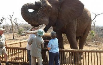 interaction 343x215 - Our South African Adventure