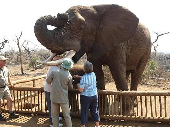 interaction - Our South African Adventure