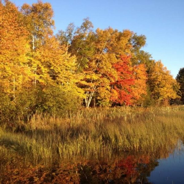 Fall Colors at the Lake2 600x600 - Namakagon Landing Accessible Lakehome