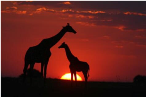img3 - Special Biome of Namibia & Botswana -14 Days From $5120 per person twin share* land only.