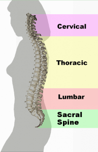 Spinal column curvature 2011 193x300 - Spinal Column Curvature