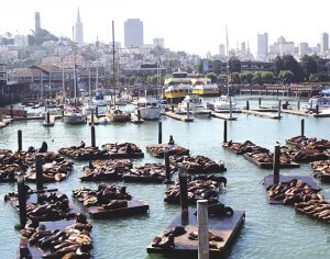 Sea Lions at Fishermans Wharf 300x236 - Sea Lions at Fisherman's Wharf
