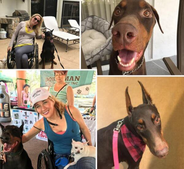 dogcollage 600x554 - How to Train a Service Dog:  Part One-Finding your Match!