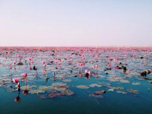 Flowers on ocean 300x225 - Flowers on ocean