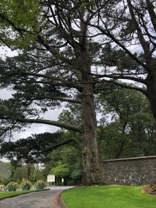 Ireland Day 12 21 225x300 - PUSHLiving Ireland 2019: Day 11-14 Galway, Kylemore Abbey, and Cliffs of Moher